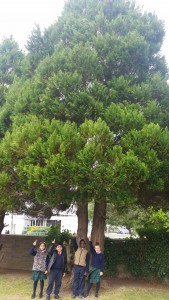 Look how tall these evergreen trees are!